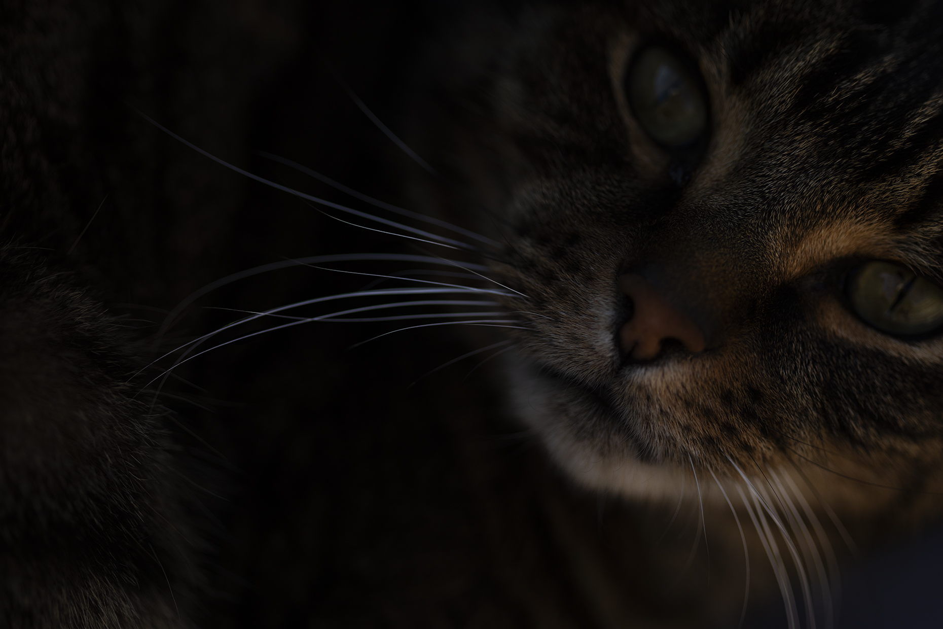 Close up of a cat, My Backyard. Paul Scott, personal project.